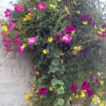 cascading hanging basket flowers