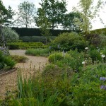 Norfolk Lavender gardens