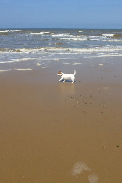Dog enjoying the beach