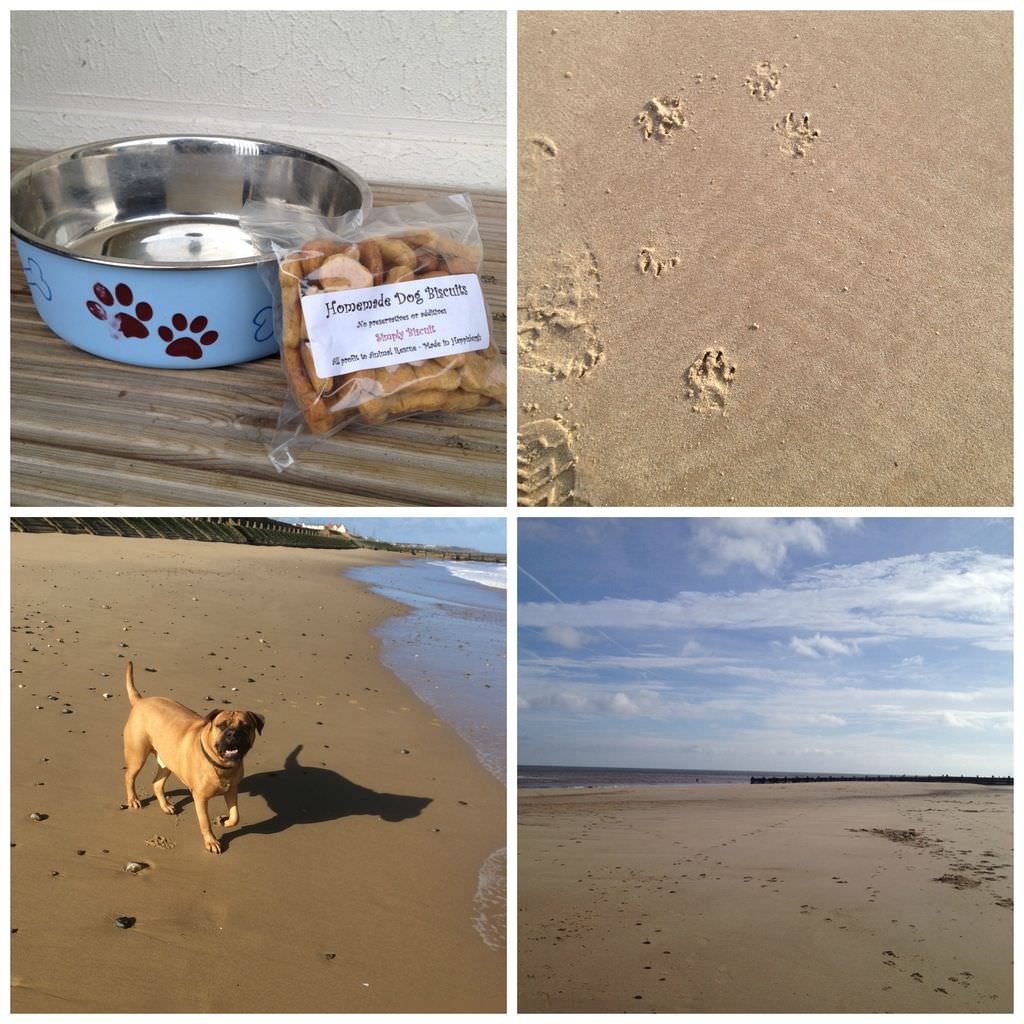 Doggie welcome treats and beaches