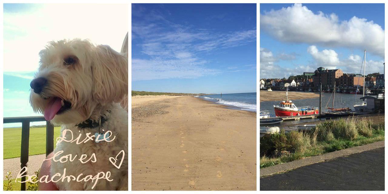 dog, beach and boats
