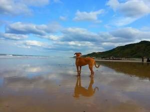 Dogs enjoy their beach holidays too