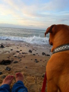 You and your dog can enjoy the Norfolk beaches