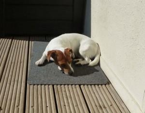 Tia relaxing on the terrace