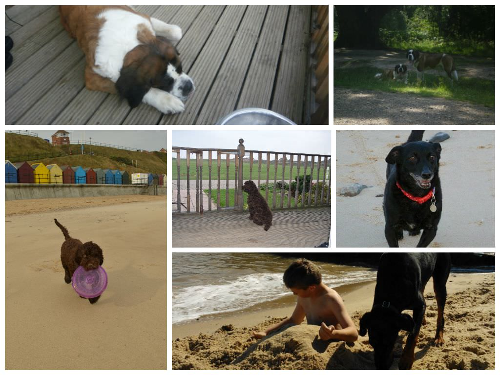 Some of our dog guests enjoying their holiday