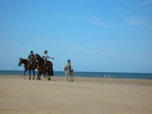 Horses on Holkham beach