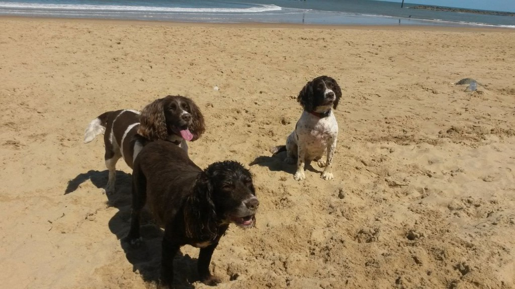 Three dogs on Bacton beach